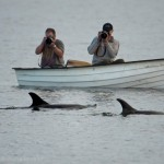 Getting up close with Shetland's wildlife
